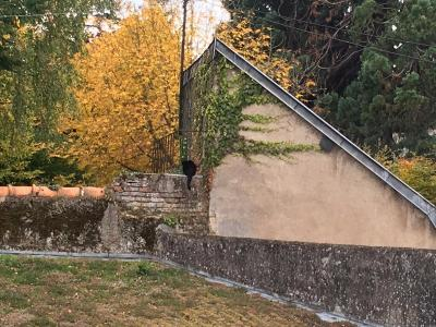 URBANISME : annulation du permis de construire autorisant une toiture-terrasse